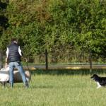 Shepherd - photo by M. Gardener